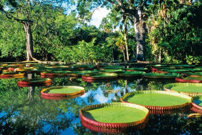 beautiful place in Mauritius