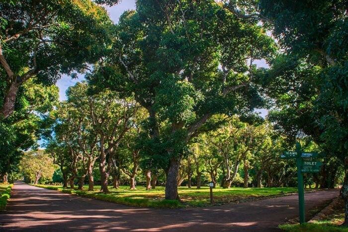 long green trees