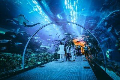 Amazing aquarium in dubai
