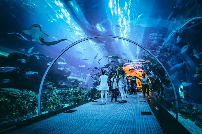 Amazing aquarium in dubai
