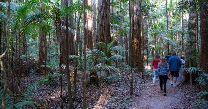 Scenic Trails For Hiking In Australia