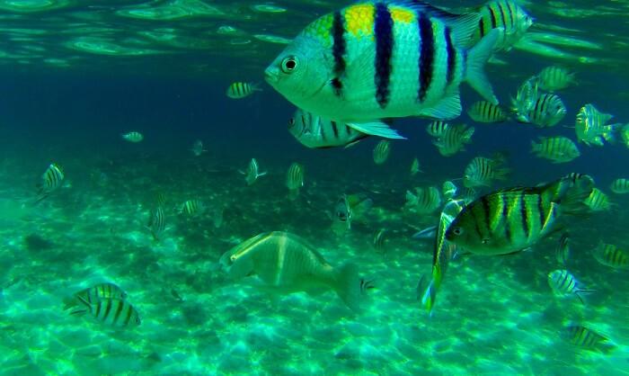Terengganu Marine Park