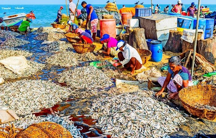 Fishing village negombo