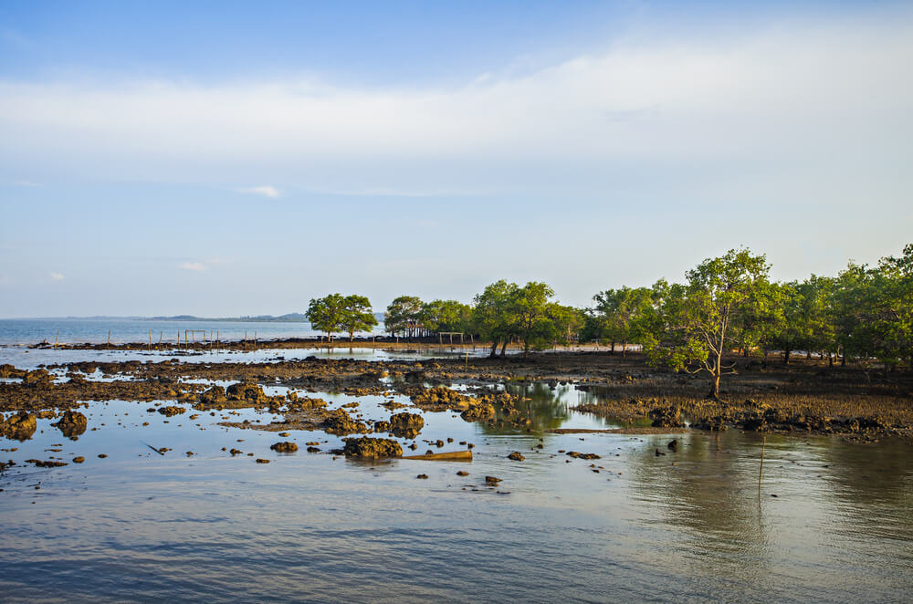 a view of swampy mangroves