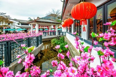 beautiful flowers of village ngong ping