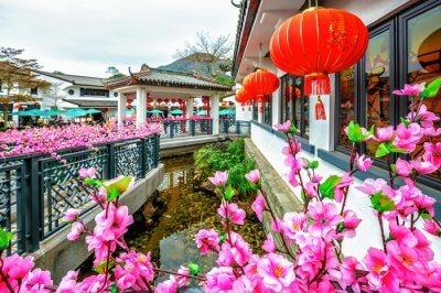 beautiful flowers of village ngong ping