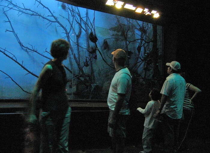 exciting sensory effects at the 4-D Theater
