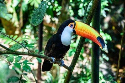 Brazil National Parks