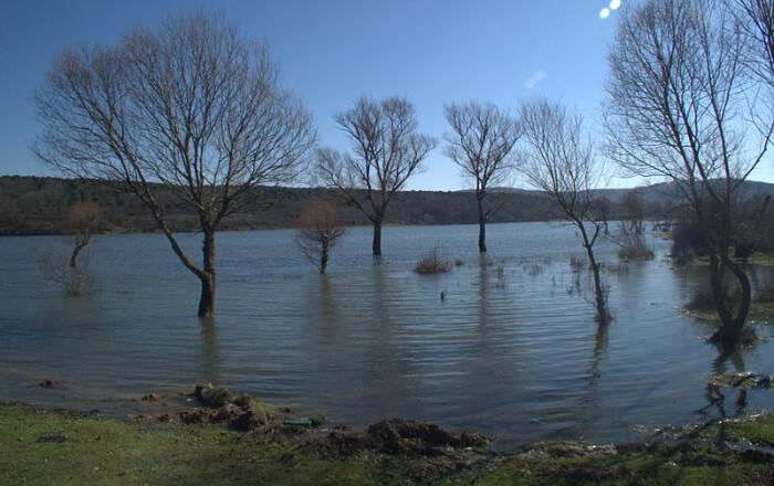 large trees inside the lake