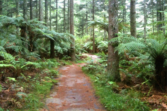 Explore the Redwoods Whakarewarewa Forests