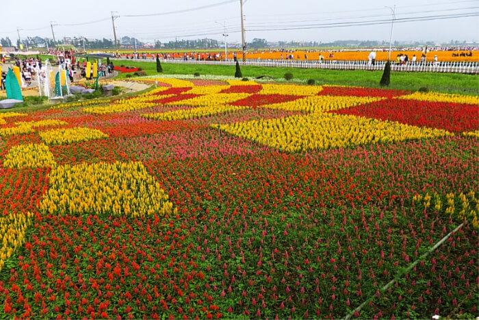 Flower Carpet Festival