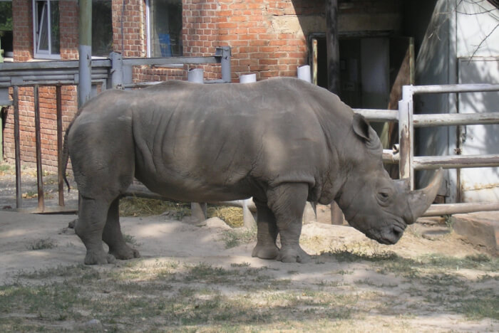 Johannesburg Zoo Animals