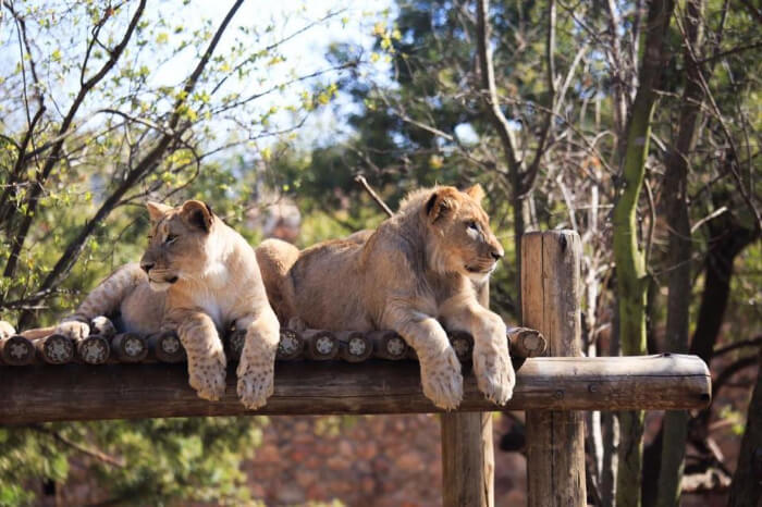 Johannesburg Zoo Exhibits