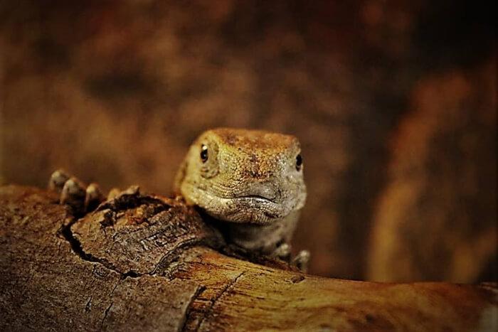 Meet the reptiles at Reptisland