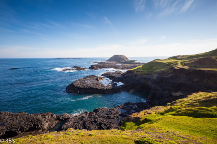 Phillip Island is a great destination for animal lovers