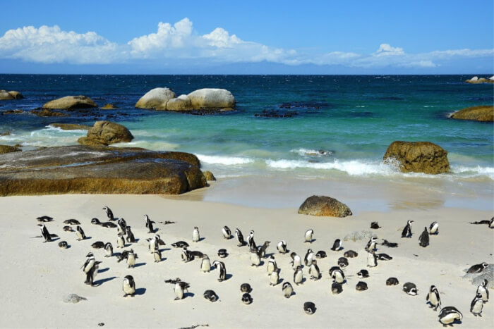 Swim with the penguins