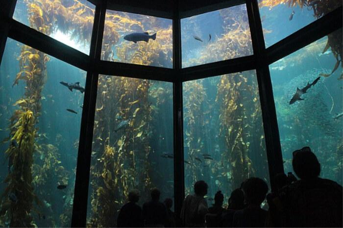 aquatic-habitat animals and plants