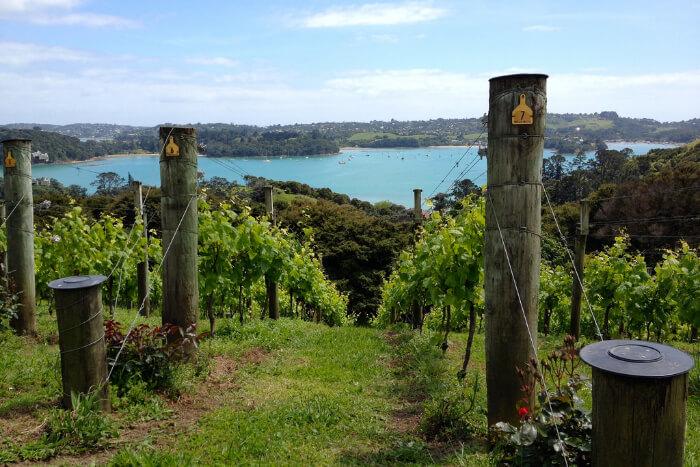 Visit the Mudbrick winery