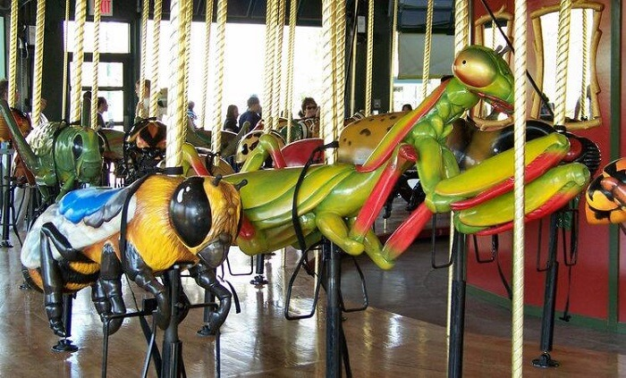 Favorite bug and ride it