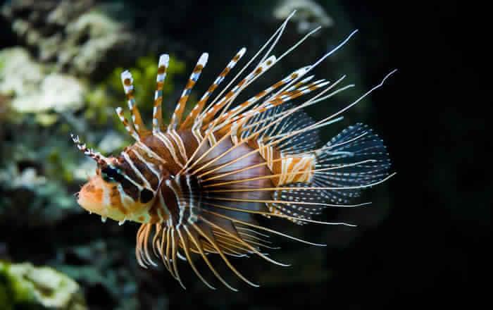 Unique creature of earth