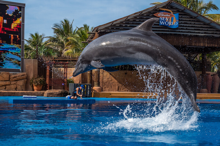 Africa's Largest Marine Theme Park