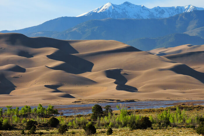 A wide view of A mountain deer at Great Sand Dunes National Park
