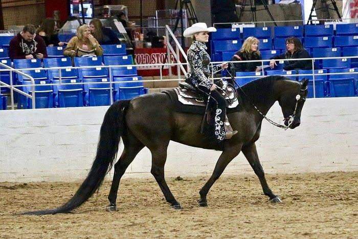 Arabian Horse ride