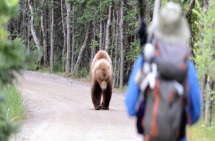 Bear Aware Classes