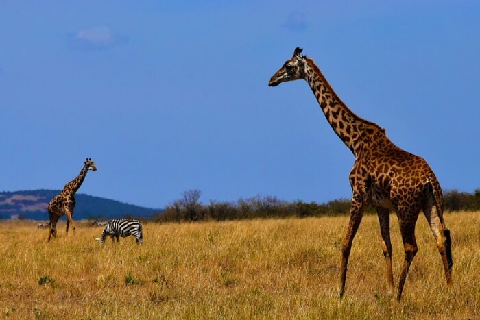 Best Time For Trekking In Tanzania