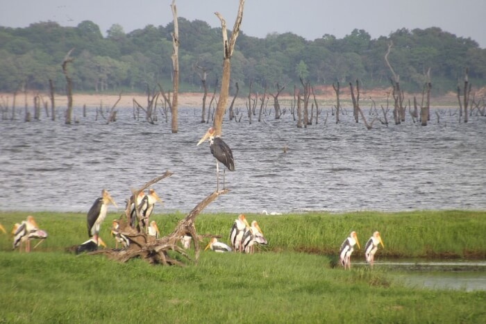 Best Time To Visit Kaudulla National Park