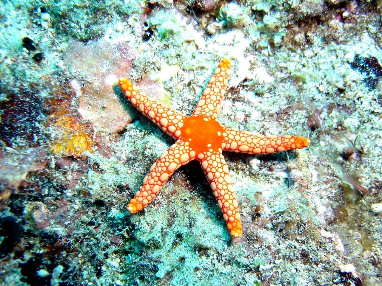 incredible collection of marine creatures