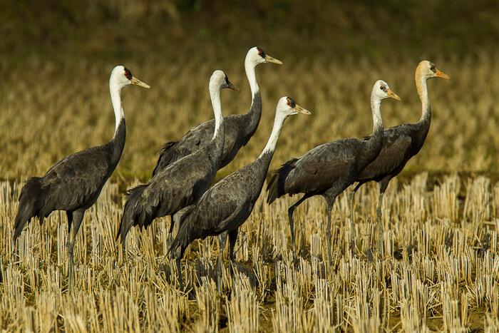 Birds in Hokkaido