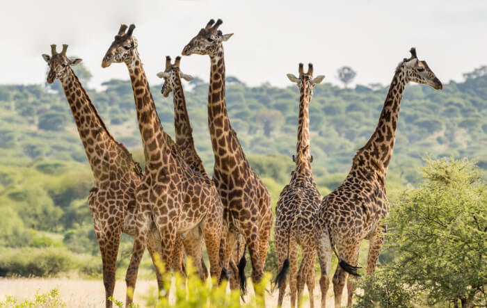Experience the best of Tanzania In October