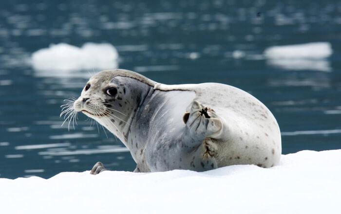 LeConte Seal