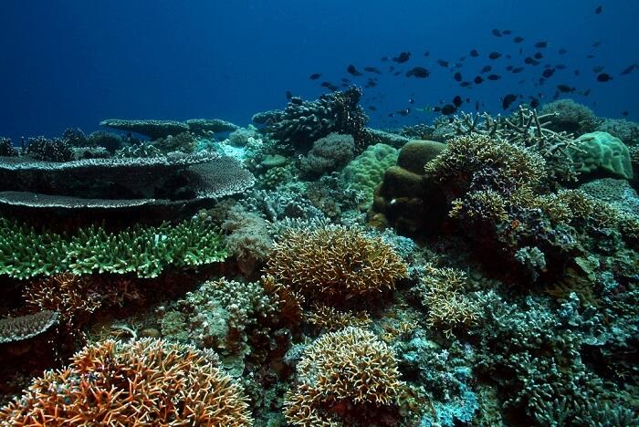 Captivating Atolls world