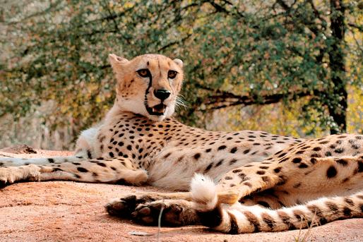Chehaw Wild Animal Park