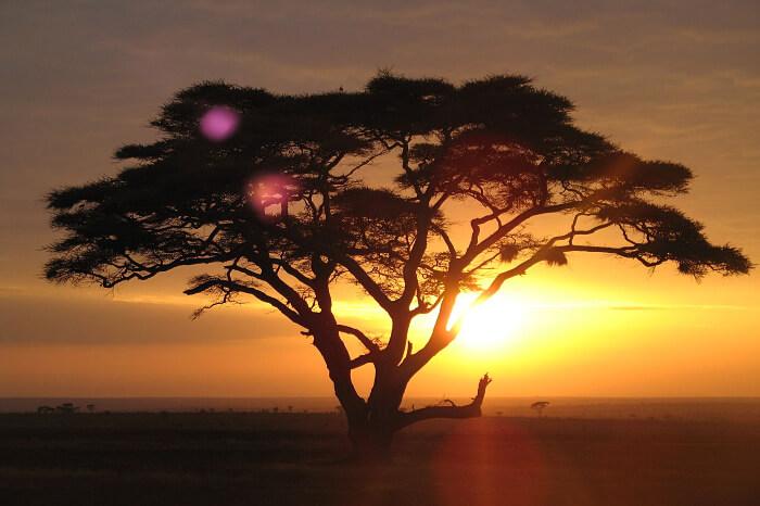 Cost Of Safari In Tanzania