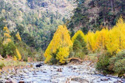 Khaling Wildlife Sanctuary tips
