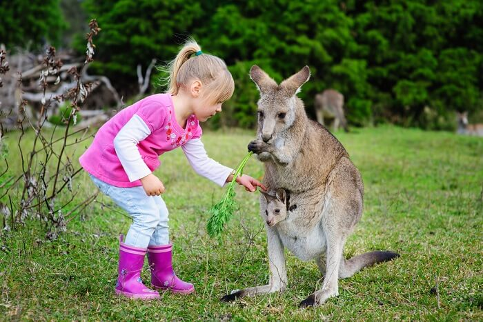 Best and Famous Zoos of Sydney