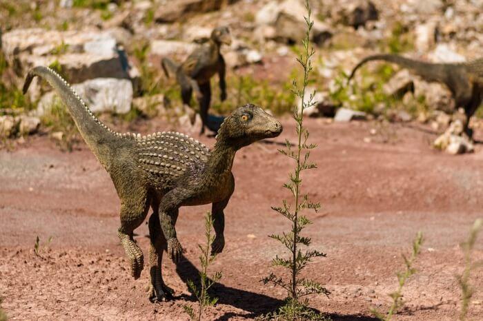 Extinct Dino Dragon Dinosaur Gad Model Mammal