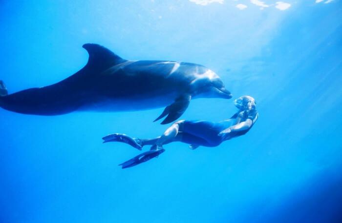 Dolphin Encounters Mauritius