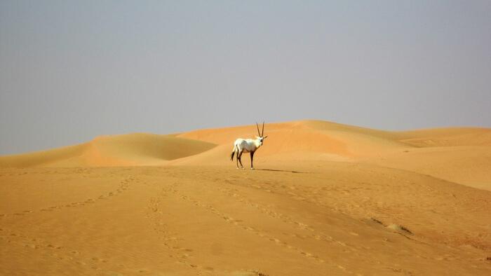 Dubai Desert Conservation Reserve in Dubai