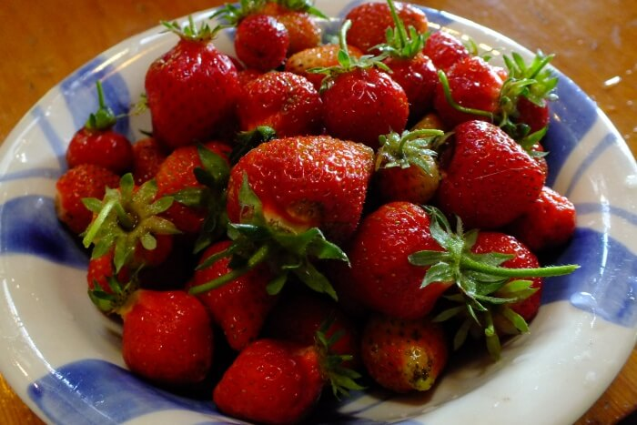 Eat the best strawberries in the world