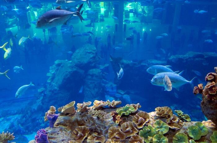 Emaar-Aquarium