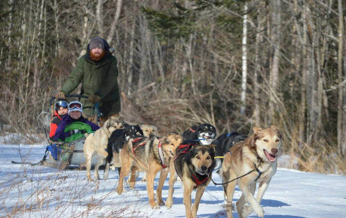 ride on a dog sled