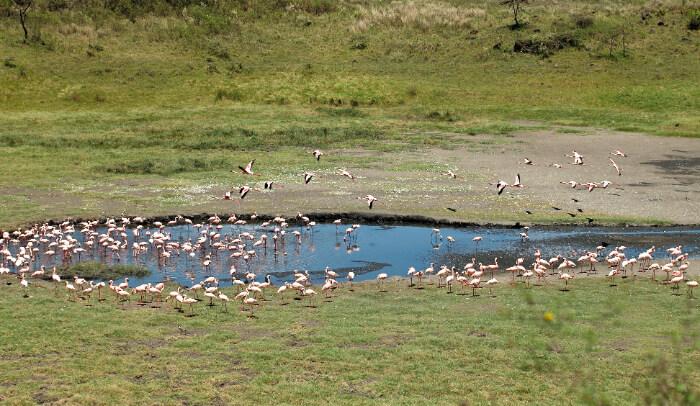 Birds drinking water
