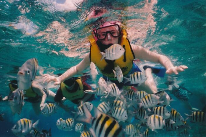 sea fishes