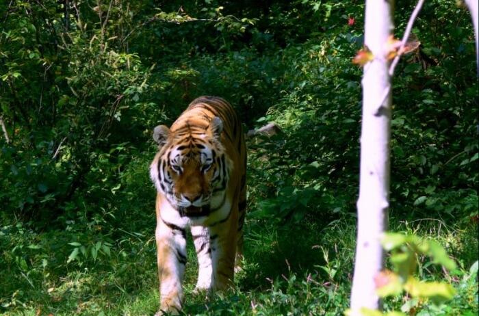 Karaganda Zoo
