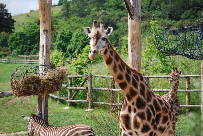 Meet the Animals at Prague Zoo