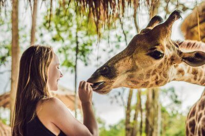 Miami Safaris